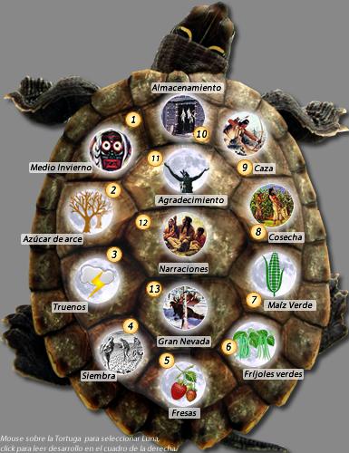 Resultado de imagen para iroqueses tortuga